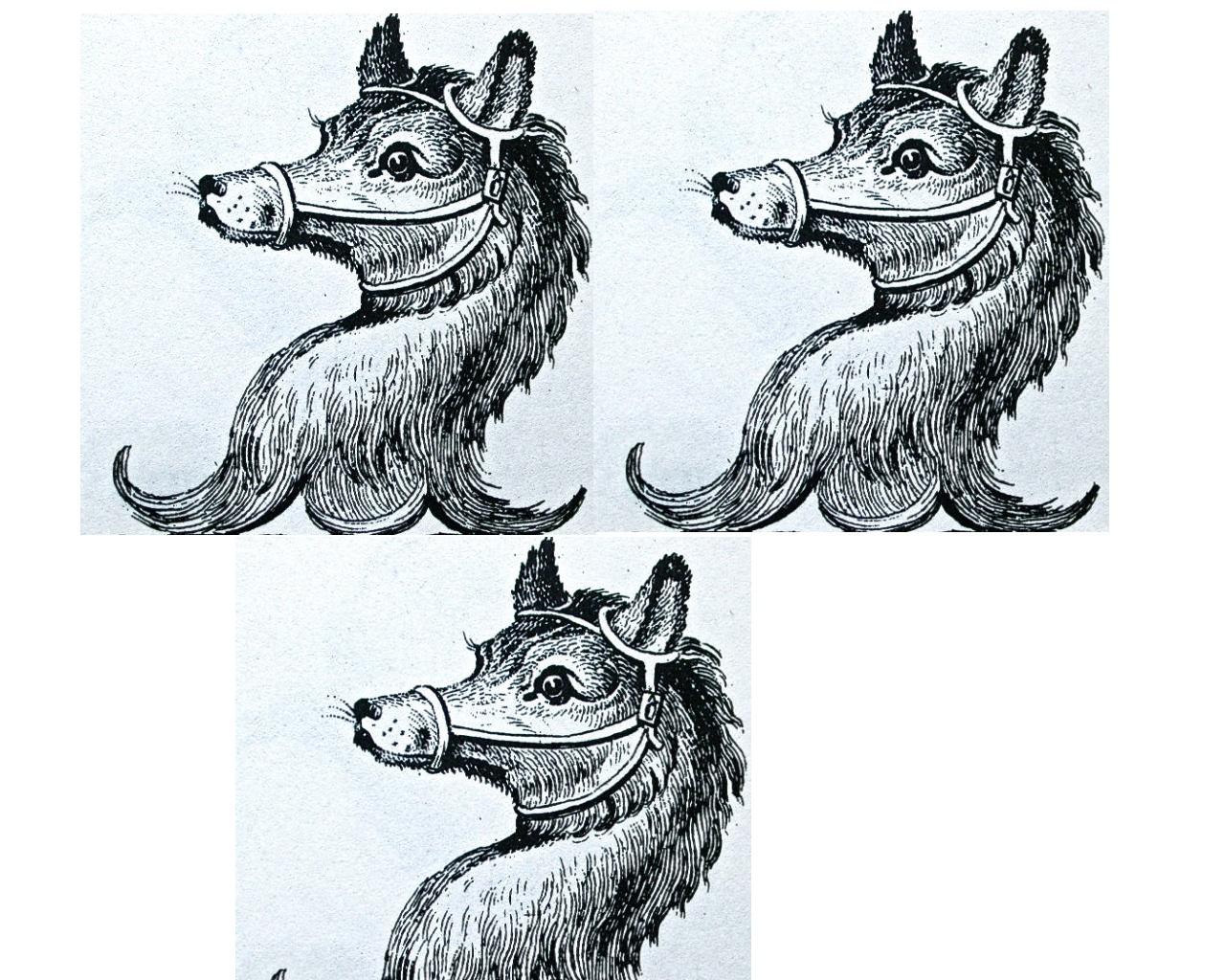 bears heads (3)