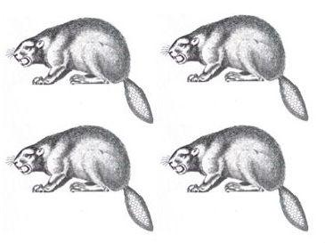beavers (4)