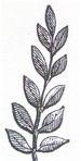 branch (laurel)