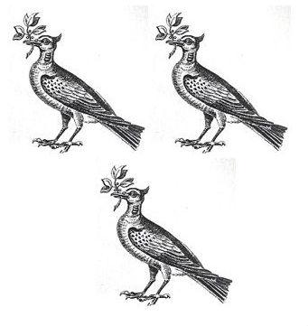 doves (3)