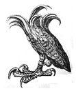 falcon's leg
