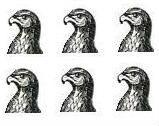 falcons heads (6)