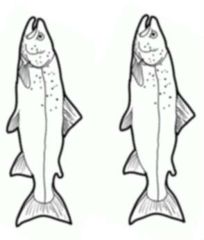 fishes (2)