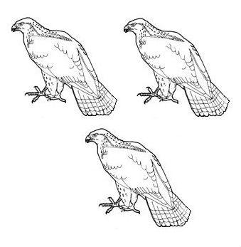 hawks (3)