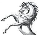 horse, demi-