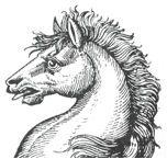 horses heads (2)