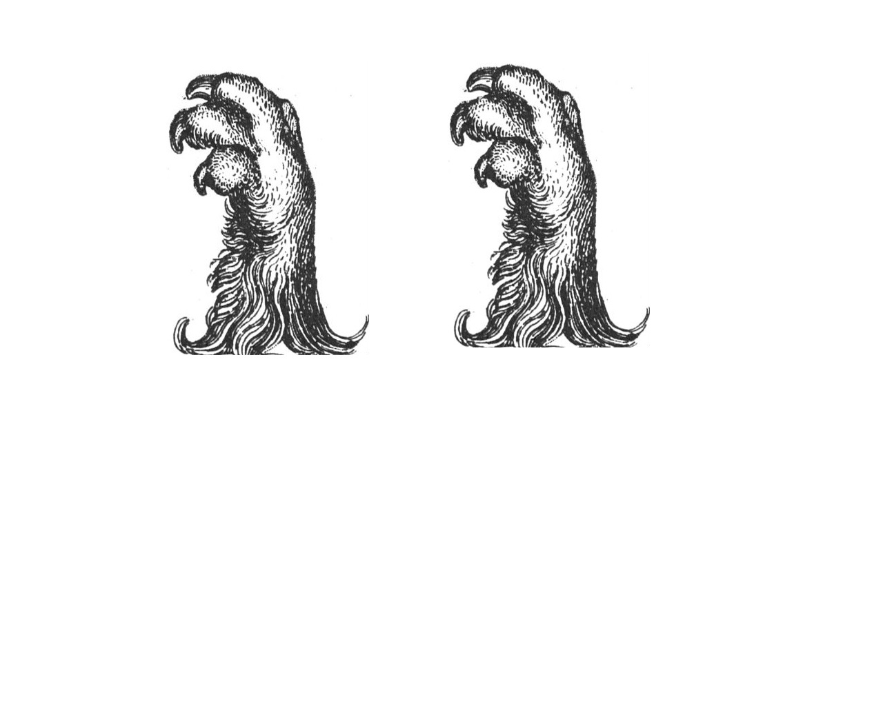 lions feet (2)