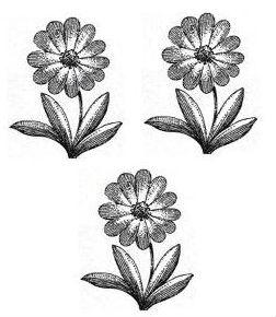 marigolds (3)