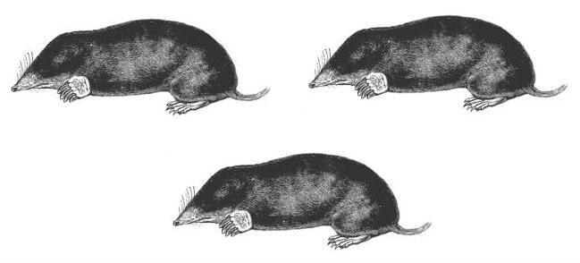 moles (3)