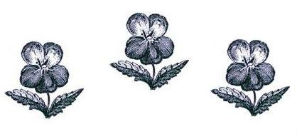 pansies (3)