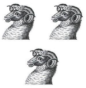 rams heads (3)