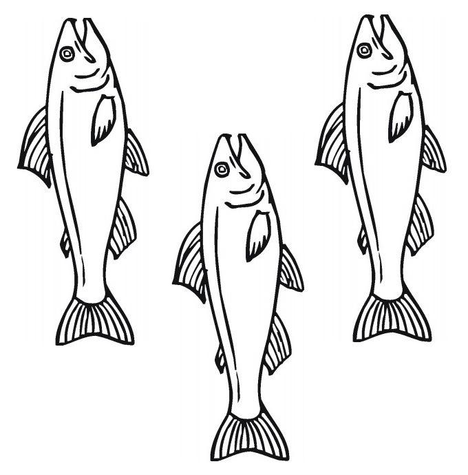 salmon (3)