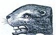 seals heads (3)