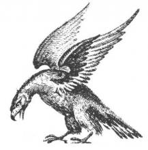eagle wings elevated