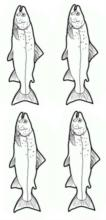 fishes (4)