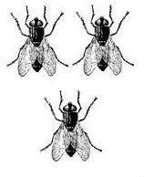 flies (3)