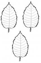 leaves (birch) (3)