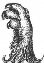 lion's foot