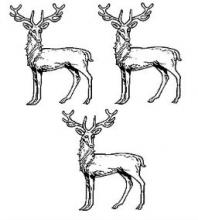 stags at gaze (3)