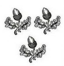 acorns (3)