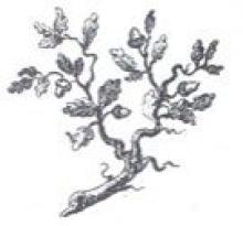 branch (oak)