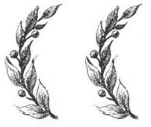 branches (olive) (2)