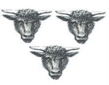 bulls heads (3)