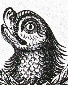 dolphin's head