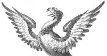 eagle's head and wings