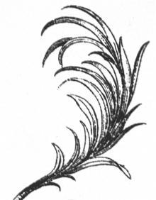 branch (palm)