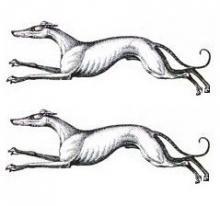 greyhounds (2)