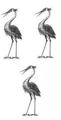 herons (3)