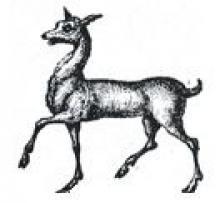 hind trippant