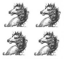 horses heads (4)