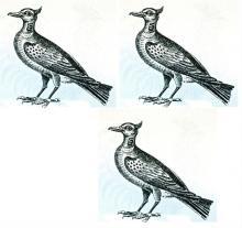 lapwings (3)