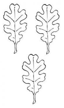 leaves (oak) (3)