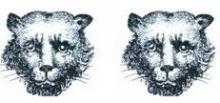 leopards faces (2)