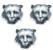 leopards faces (3)