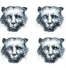 leopards faces (4)