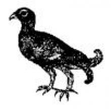 moorcock