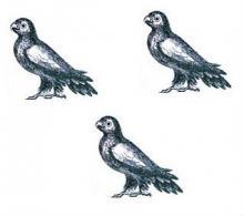 parrots (3)
