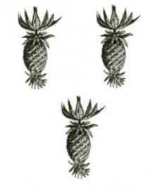 pineapples (3)
