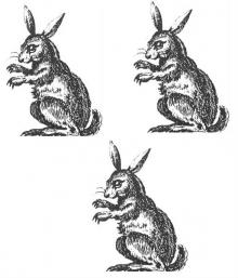 rabbits (3)
