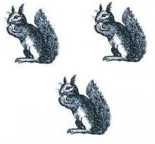 squirrels (3)