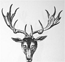 stag's head caboshed