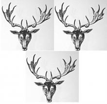 stags heads caboshed (3)
