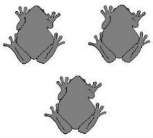 toads (3)