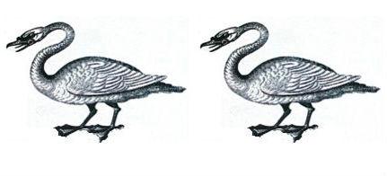 swans (2)