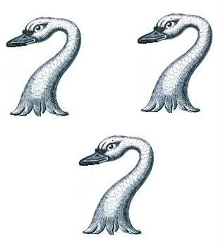 swans heads (3)