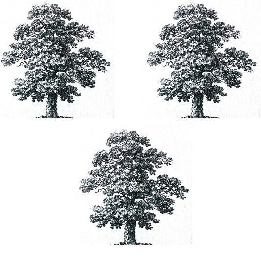 trees (oak) (3)